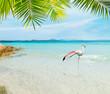 Flamingo in a tropical beach