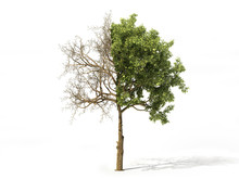 Realistic Tree Half Covered Of Leaves Isolated On A White. 3d Illustration