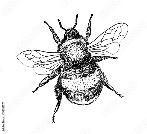 Foto Bumblebee insect hand draw illustration