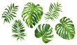 canvas print picture Realistic tropical botanical foliage plants. Set of tropical leaves: green palm neanta, monstera. Hand painted watercolor illustration isolated on white.
