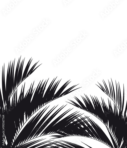 Black silhouette, tropical palm leaves, isolated on a white Wall mural