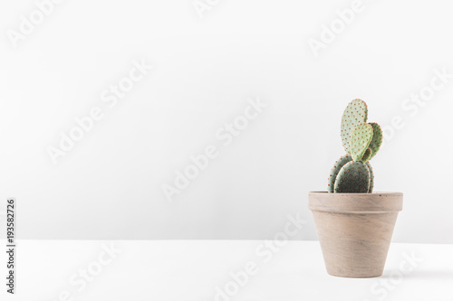 Wall Murals Cactus beautiful green potted cactus on white