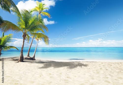 Fotobehang - Caribbean sea and coconut palms