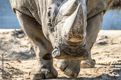 Tuinposter Neushoorn Head portrait of Rhino on the sand