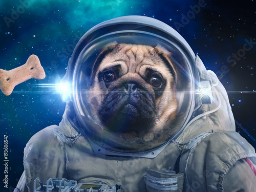 Dog in space suit hunts dog food, hunt