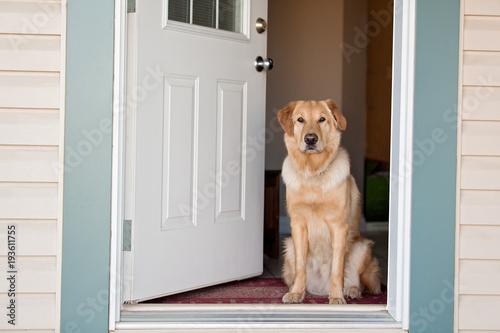 Golden Retriever at front door Canvas Print