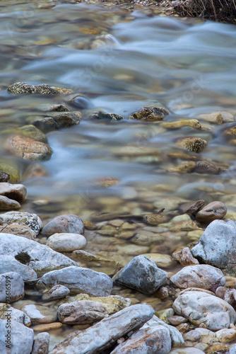 Staande foto Rivier Sassi di un fiume in primo piano e acqua che scorre sullo sfondo