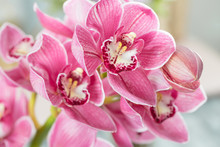 Pink Orchid Flower On Light Ba...