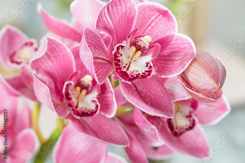 Fotografie, Tablou Pink orchid flower on light background