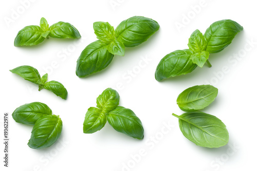 La pose en embrasure Condiment Basil Leaves Isolated on White Background