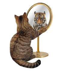The cat looks at his reflection in a mirror. It sees a tiger there.