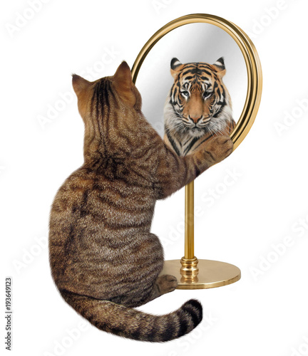 Foto op Aluminium Kat The cat looks at his reflection in a mirror. It sees a tiger there.