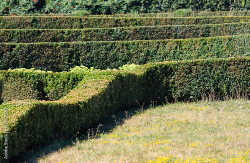 Summer trimmed boxwood in park hillside on a green grass lawn Canvas Print