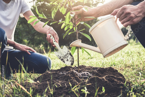 Fototapeta  Young couple planting the tree while Watering a tree working in the garden as sa
