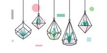 Terrarium Succulent Cactus Geometric Hanging Glass Interior Flower Wedding Plant Vector Cover Image Wallpaper Background