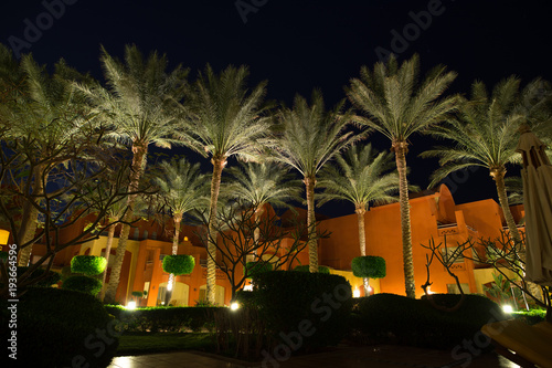 Papiers peints Jardin Resort, decorative luminosity palm trees at night sky background in Egypt