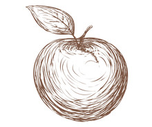 Vector Apple In Vintage Style ...