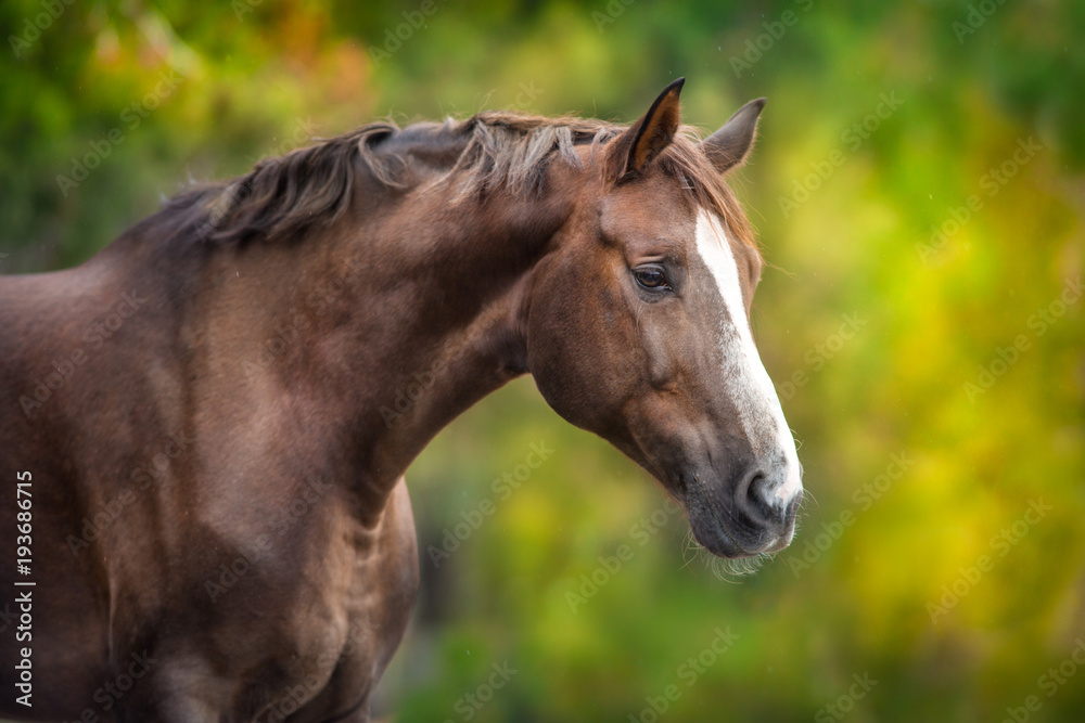 Red hore portrait on autumn background