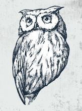 Owl On Grunge Background. Hand...