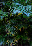 Tree Palm leafs pattern for nature background. - 193692741