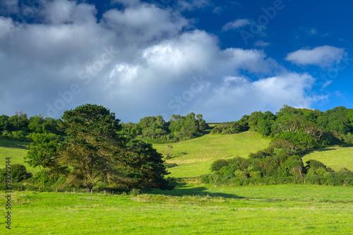 Foto auf AluDibond Karibik Green picturesque hill with trees. Good sunny weather. Branscombe. Devon. UK