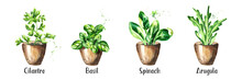 Kitchen Herbs In A Pots Set. Watercolor Hand Drawn Illustration, Isolated On White Background