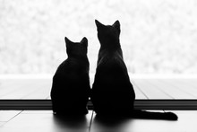 Two Black Cats Looking Out Of ...