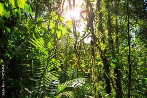 Naklejka premium Dżungla w Kostaryce