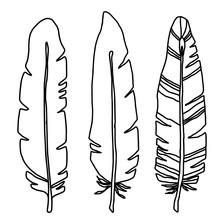 Hand Drawn Bird Black Feathers