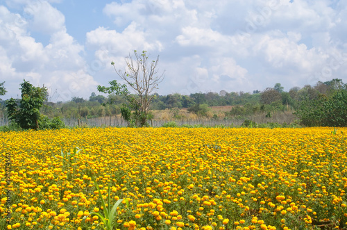 Field sky yellow landscape nature agriculture flower spring field sky yellow landscape nature agriculture flower spring mightylinksfo