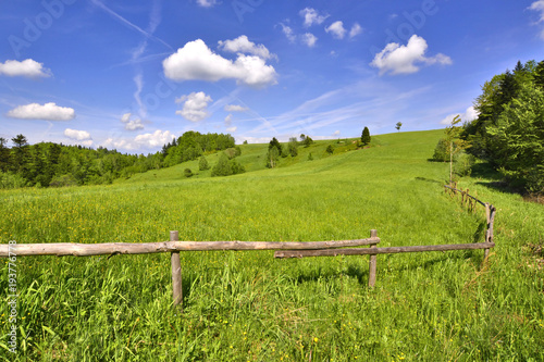 Staande foto Pistache Landscape spring scenery with meadow and wooden fence