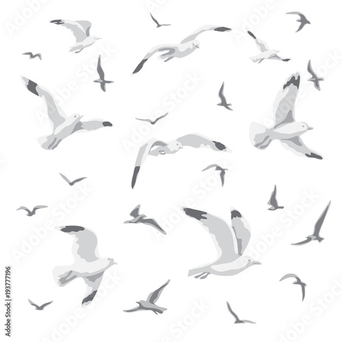 Flying Seagulls Isolated Wall mural
