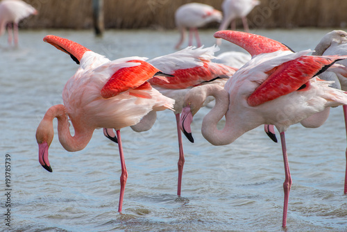 Tuinposter Flamingo Flamant rose