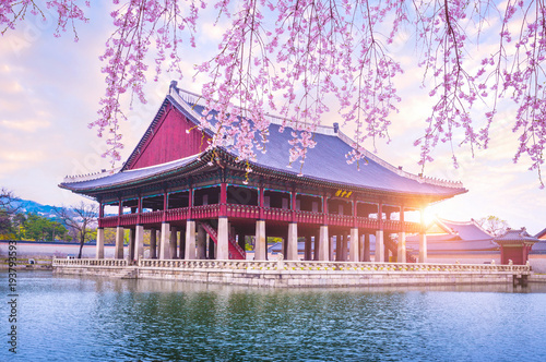 Fotografía  Gyeongbokgung palace with cherry blossom tree in spring time in seoul city of korea, south korea