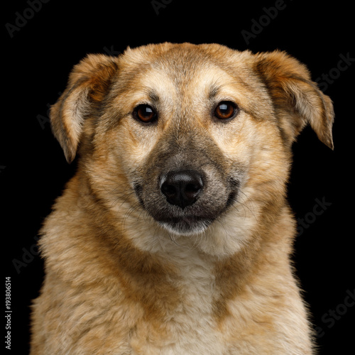 Foto  Closeup Portrait of Cute Mongrel Dog Frightened Looking in Camera, Isolated on B