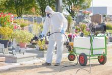 Professional Gardender Weeding...