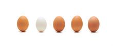 Single White Egg Among Brown O...