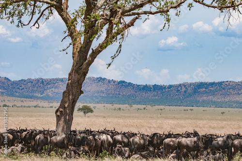 In de dag Baobab Wildlife in Aftrica