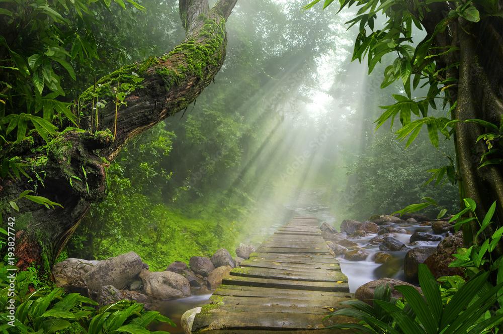 Fototapety, obrazy: Asian tropical rainforest