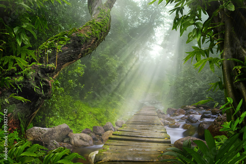 Asian tropical rainforest Wallpaper Mural
