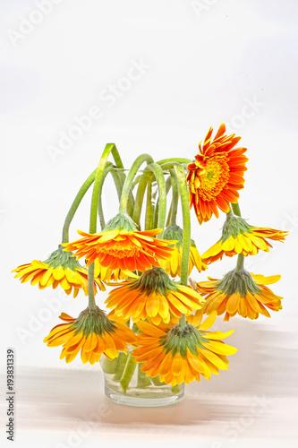 Valokuva  Drooping daisies in vase
