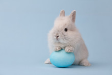 Easter Bunny Rabbit With Blue ...