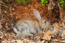 Rabbit Montenegro Sveti Nikola