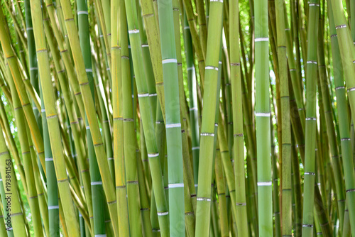 Foto op Plexiglas Groene detail of the bamboo forest