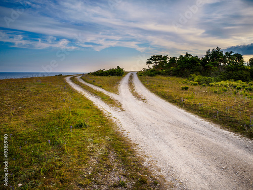 Fotografía  a gravel road that divides into two different paths that disappear on the horizo
