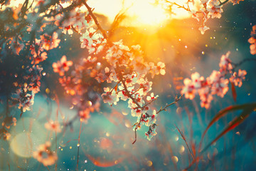 Spring blossom background. ...