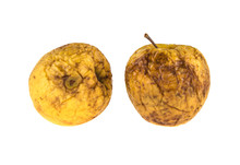 Two Rotten Apples On Isolated ...