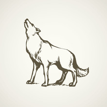 Wolf. Vector Drawing