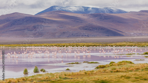 Poster Lavendel Andes region, Bolivia with snow covered volcano and wildlife at the lagoon