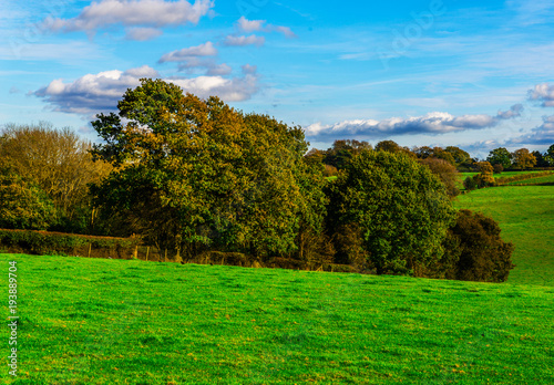 Tuinposter Blauw English green meadow on a sunny day, a typical rural landscape of the British countryside